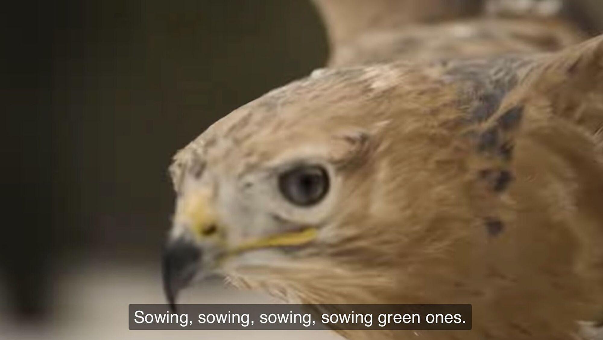 Птах у кліпі Go_A