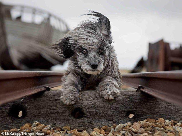 Пудель спасался от сильного ветра в Британии и бежал со скоростью 112 км/час