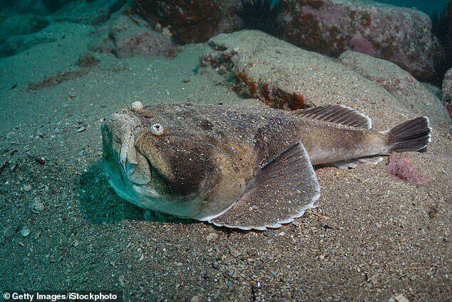 Зубастая рыба-звездочет озадачила сеть