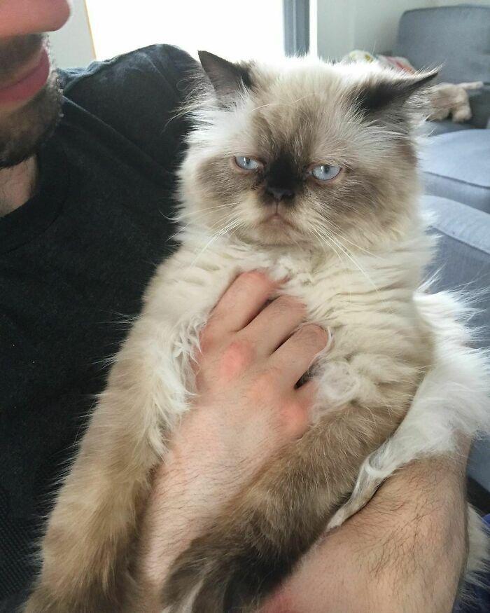 Котик заметно расстроен на фото.