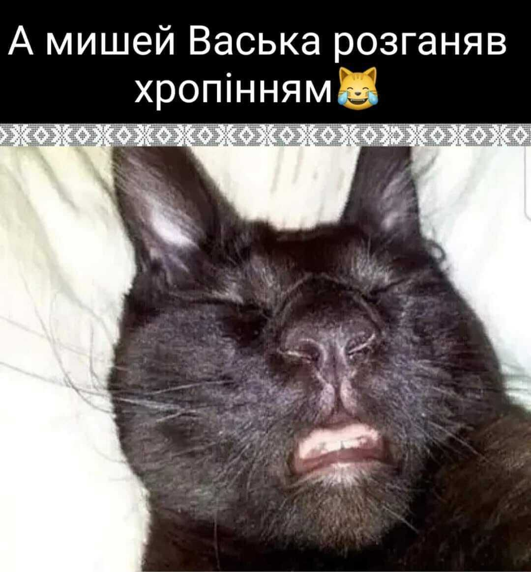 Мем о котах
