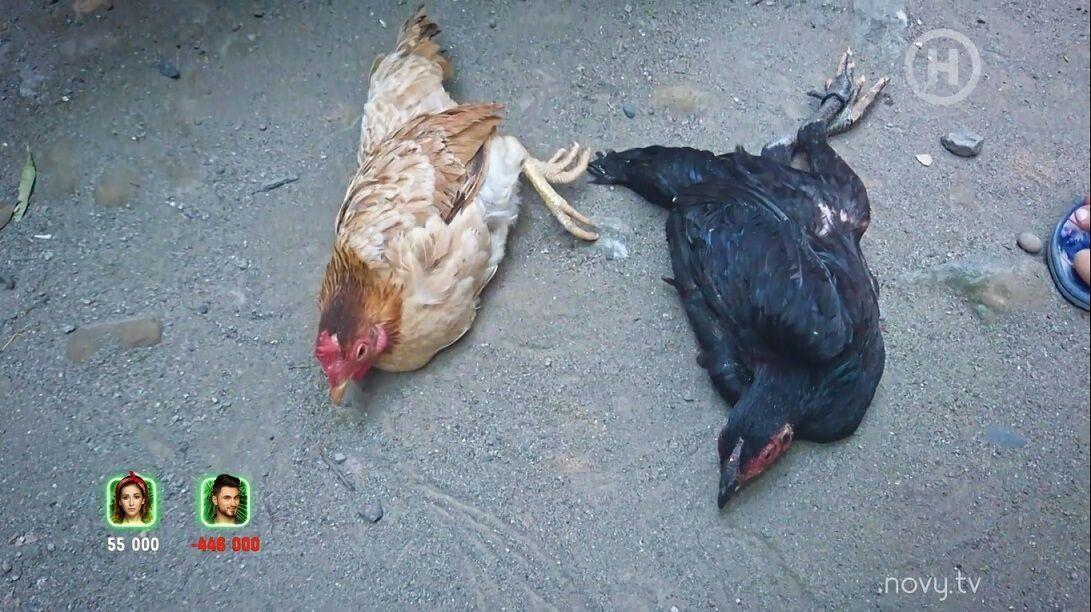 Украинская ведущая гипнотизировала кур на Суматре.