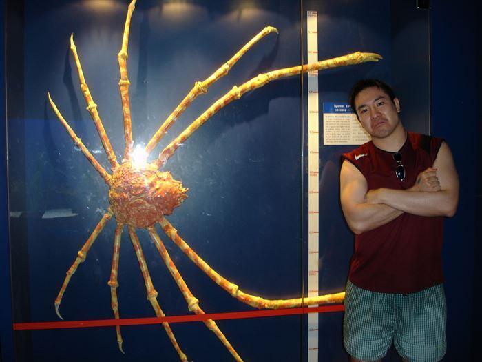 У японского краба-паука самые длинные ноги краба в мире.