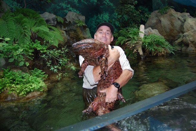 Мужчине удалось найти китайскую саламандру.