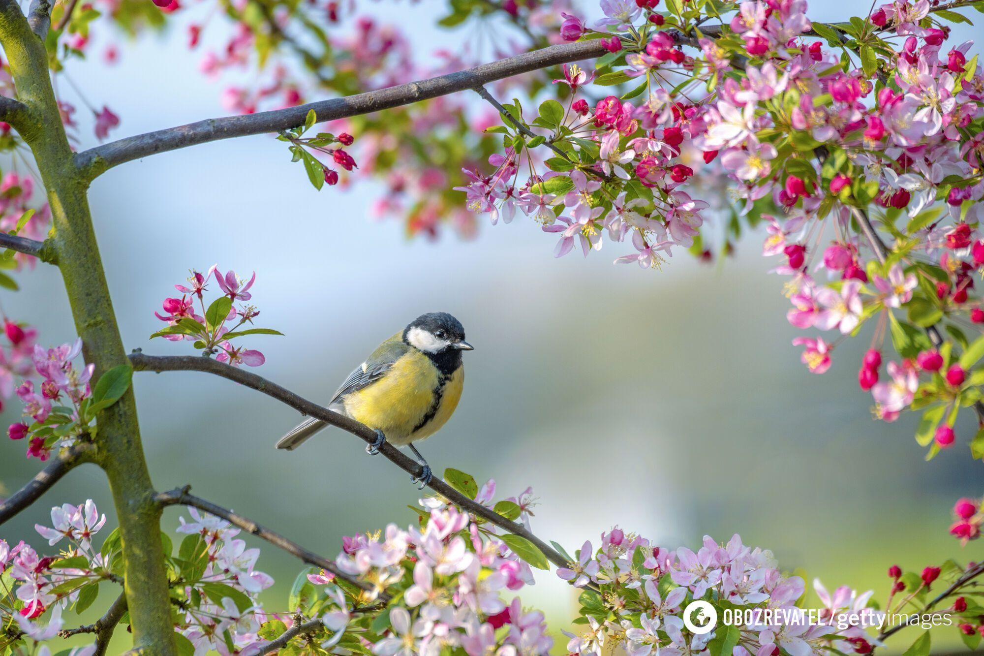 Справжнє тепло прийде в Україну на початку квітня.