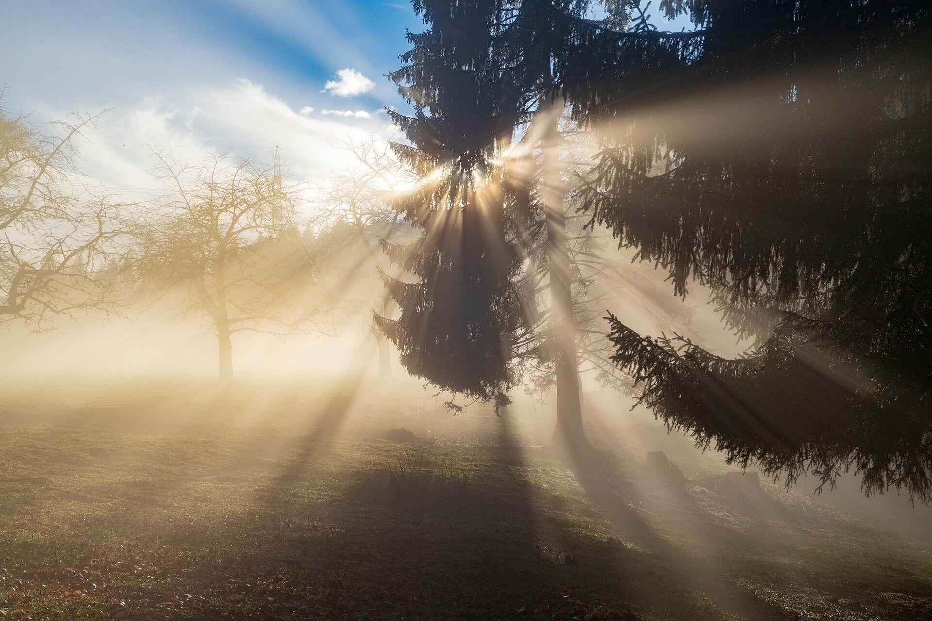 16 марта стоит отказаться от прогулок в лес