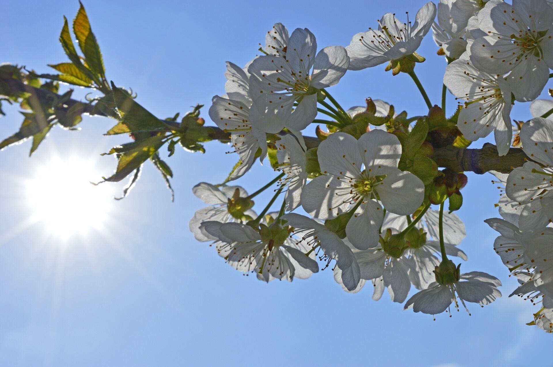 В 2021 году Солнце 20 марта в 11:37 по Киеву пересечет небесный экватор