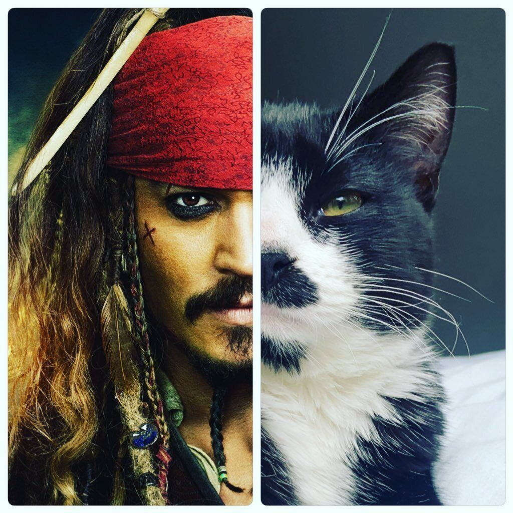 Кота порівняли з Джеком Горобцем