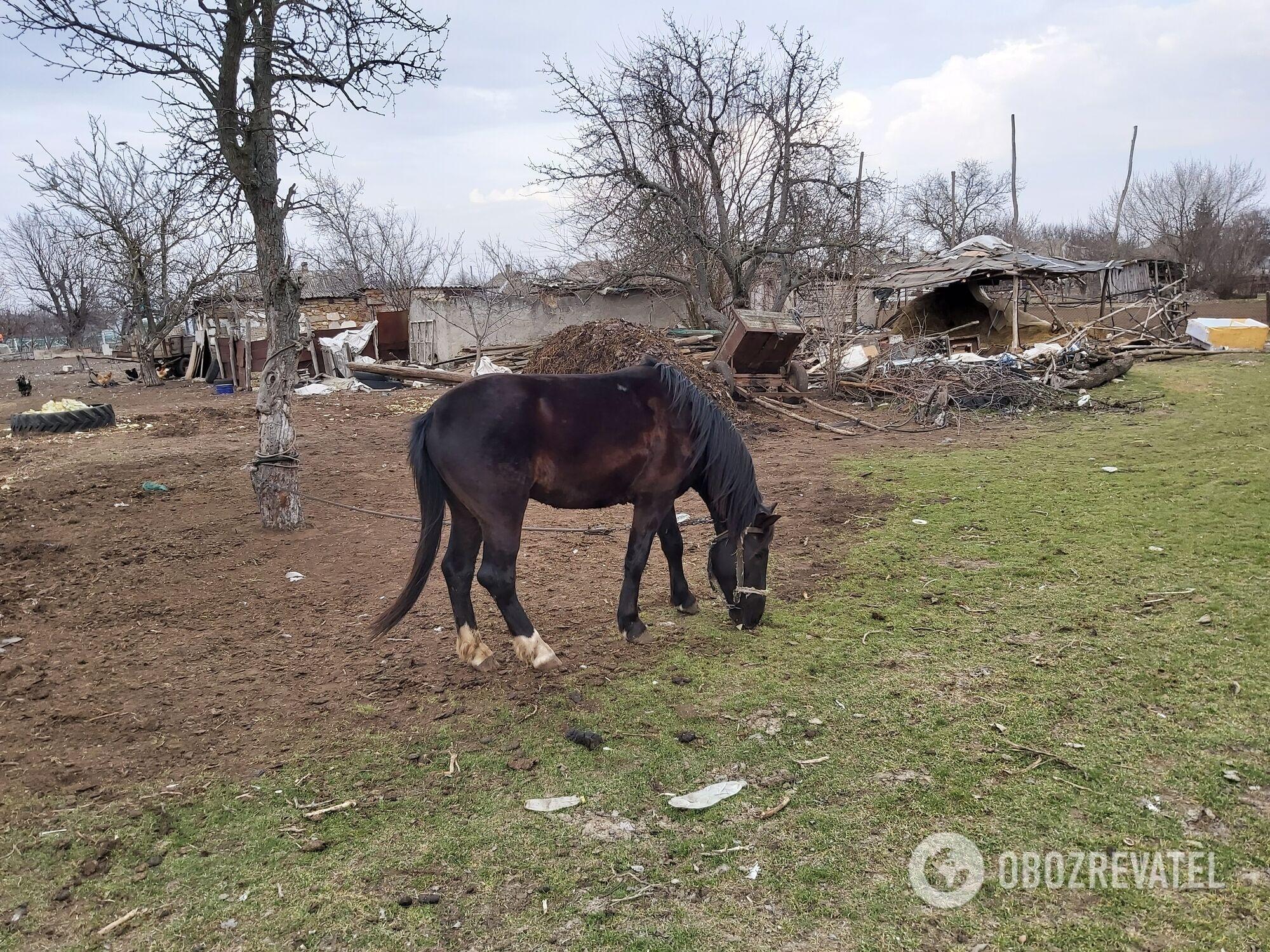 Щасливе – ідилічне українське село.