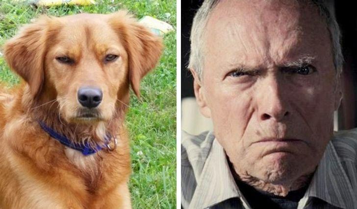 Собака мого друга схожа на Клінта Іствуда