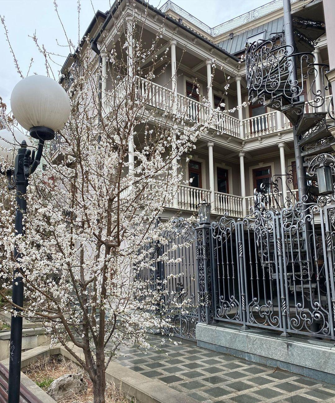 Осадчая показала Тбилиси