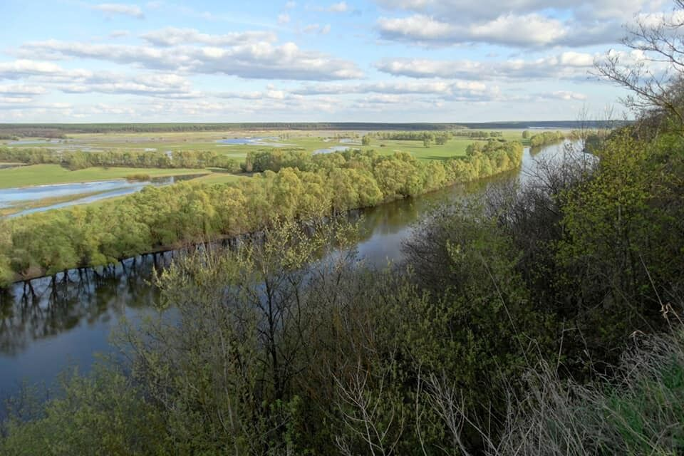 Десна – єдина велика рівнинна річка України, що зберегла свою заплаву у природному стані