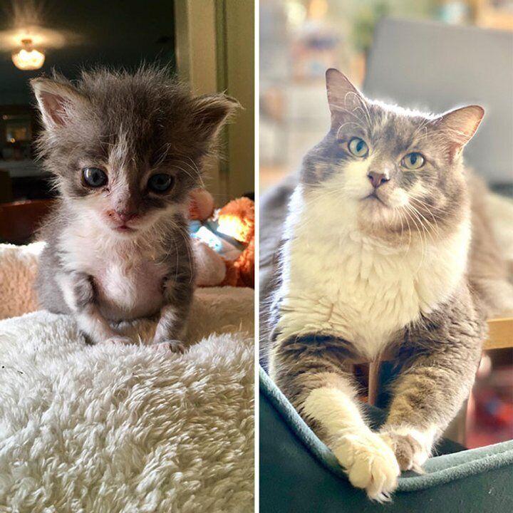 Новая хозяйка вылечила бездомного котика.