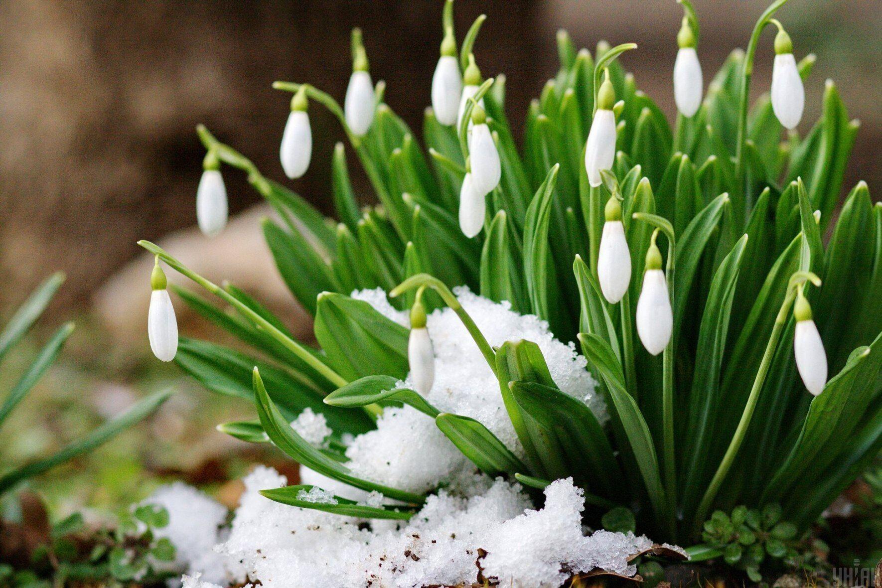 В начале апреля наступит весна настоящая.