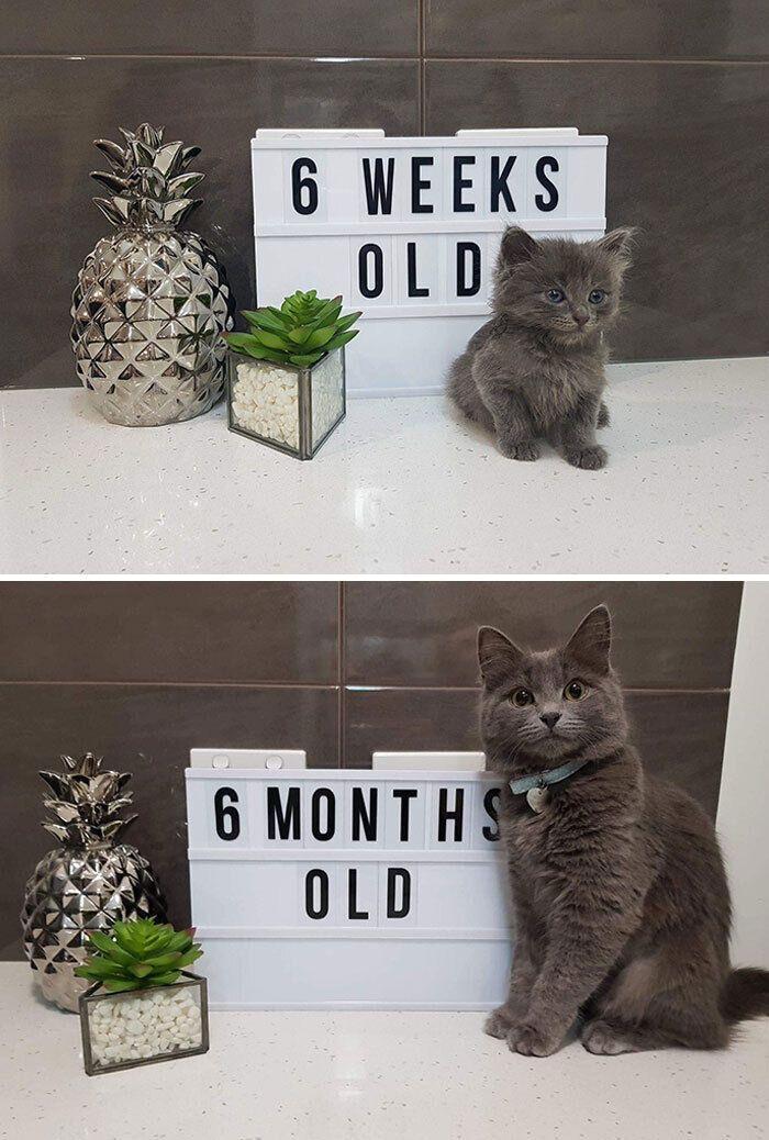 День, когда хозяева приняли котика и сейчас.