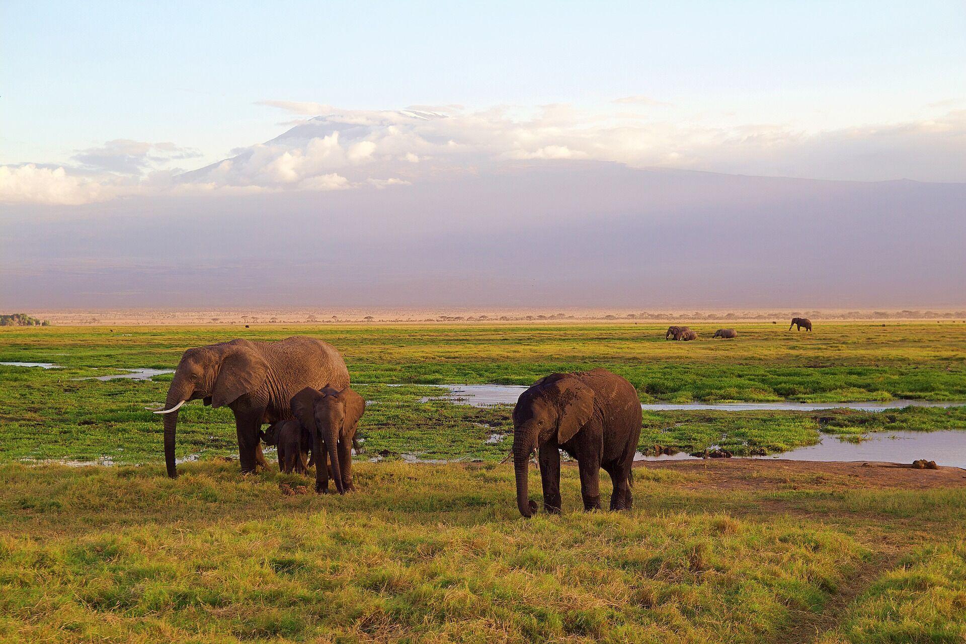 Найкращий час для поїздки до Кенії – час великої міграції