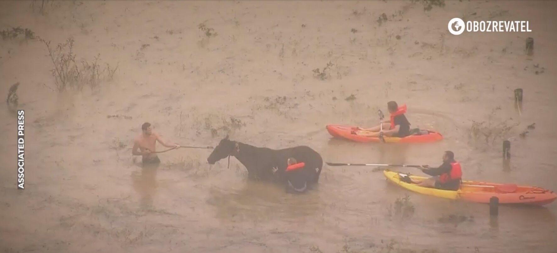 Люди рятують худобу від повені в Австралії.