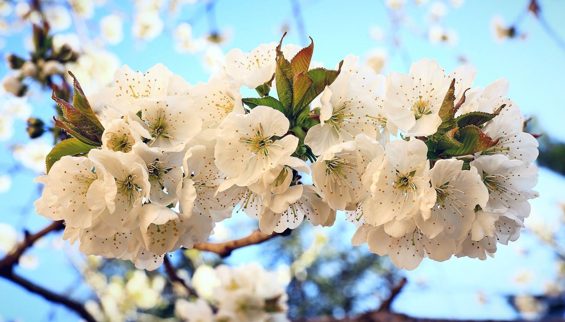 Ясна погода на Благовіщення – до багатого врожаю і погожого літа