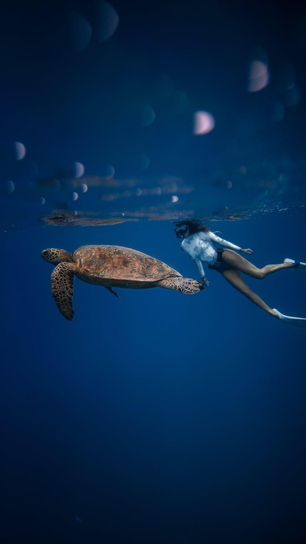 Подводный мир Египта богат на морских жителей.