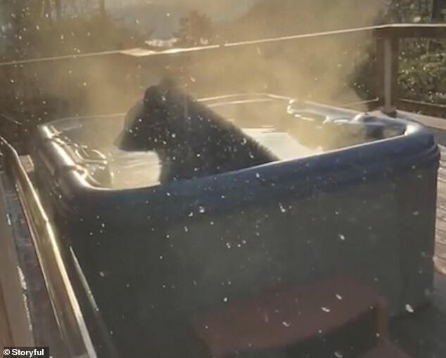 Медведь наслаждается в теплой воде