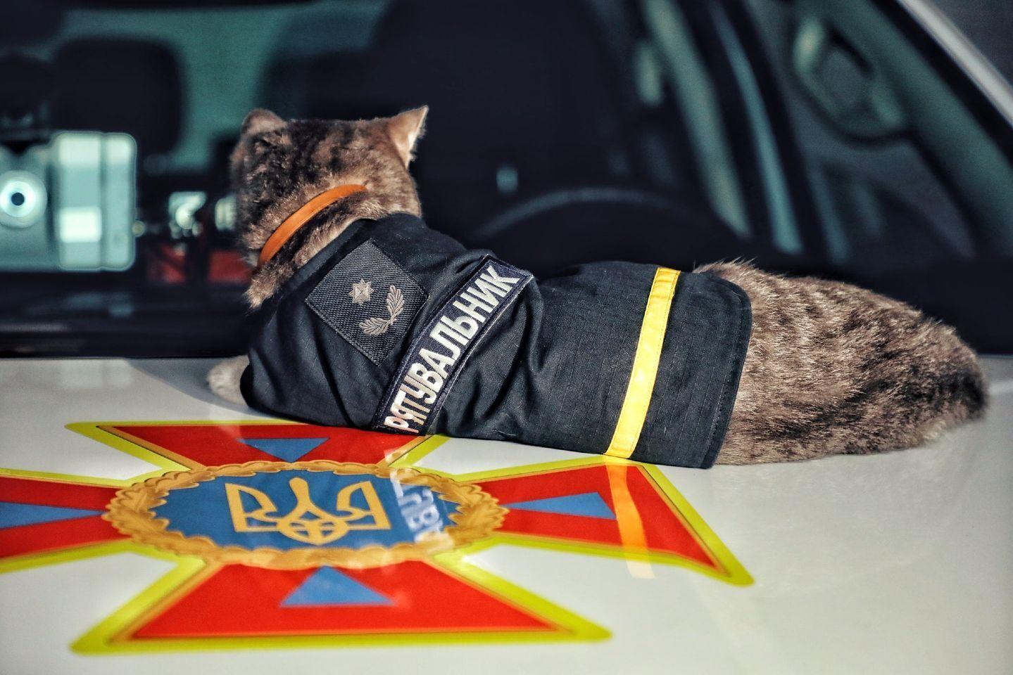 Кіт працює рятувальником.