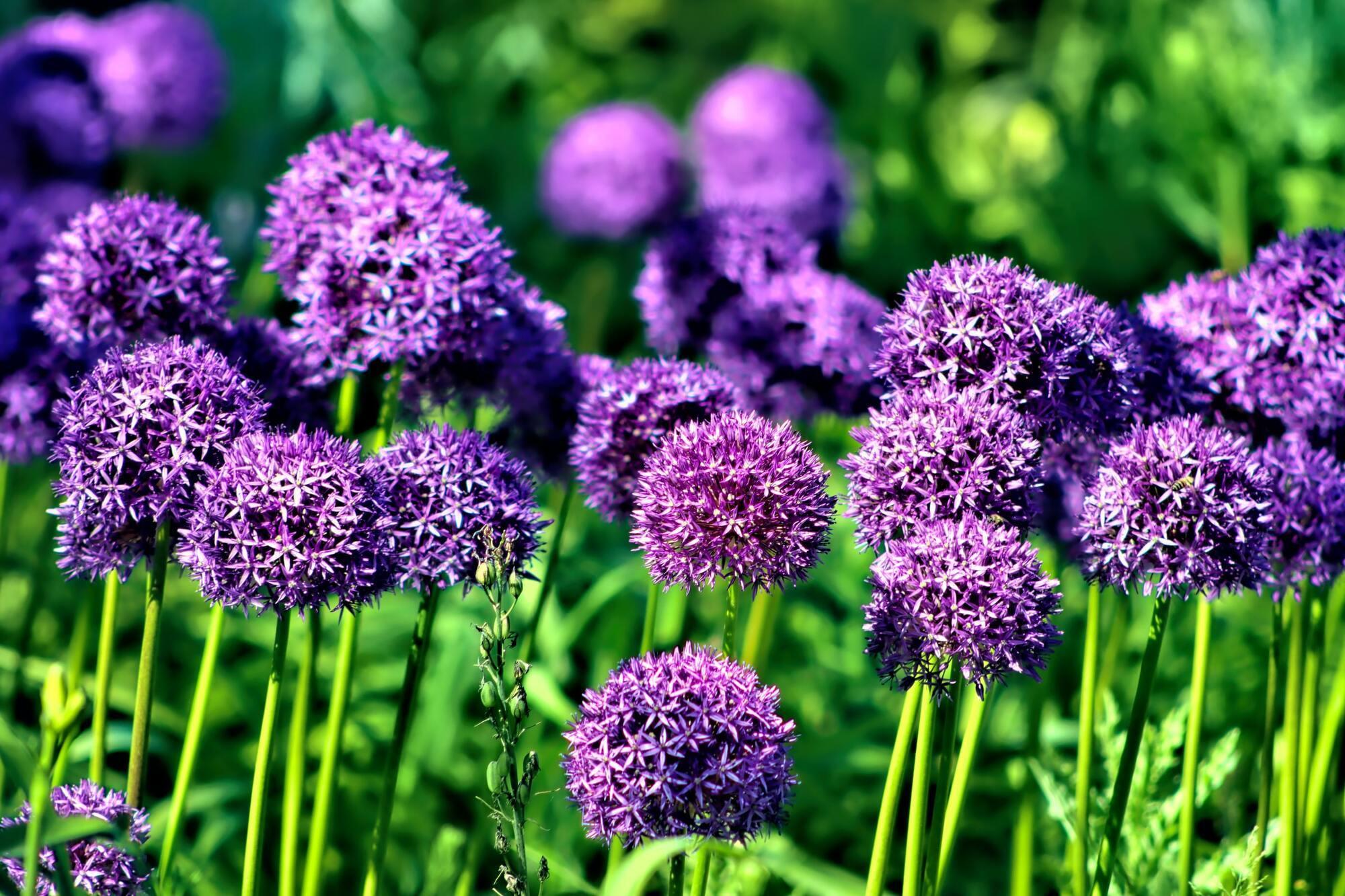 Известно, что фиолетовый успокаивающе действует на психику