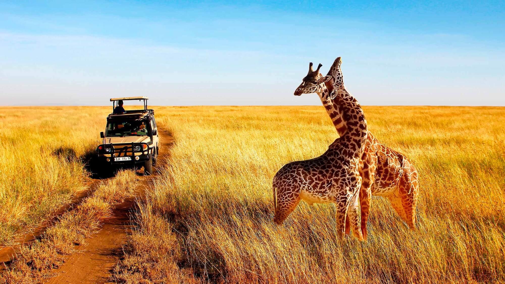 Три прямых рейса в Кению запланированы на 16 апреля, 24 апреля и 3 мая