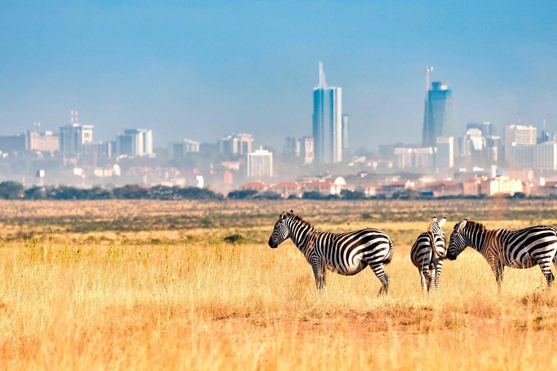 Главная фишка отдыха в Кении – это наблюдение за животными, птицами и экстремальные поездки по саванне