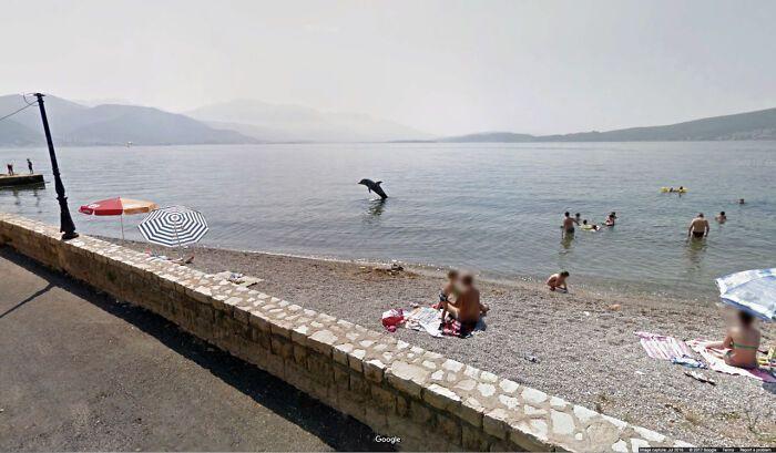 Відпочивальники не очікували побачити дельфіна