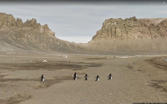 Пінгвіни на шляху додому