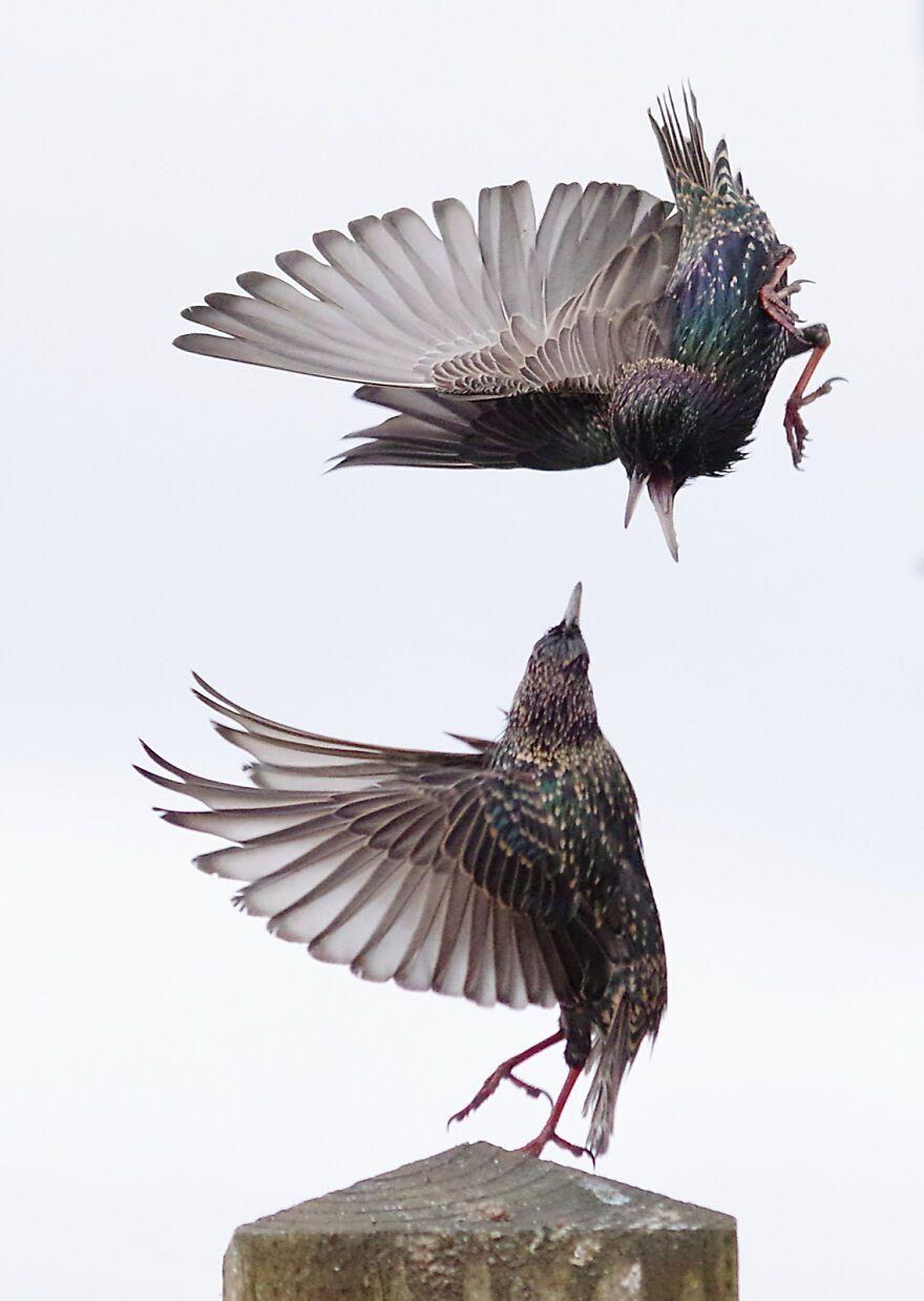 Птахи не поділили горіх