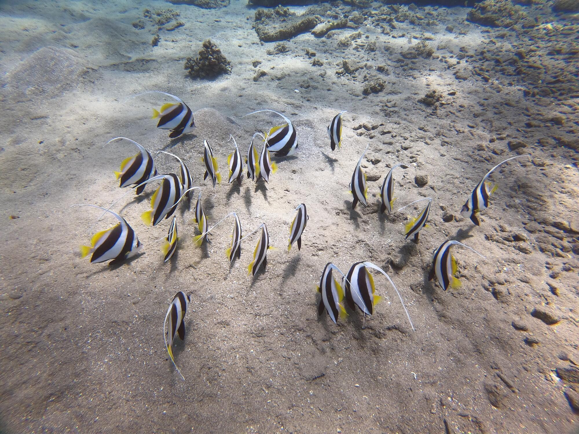 Родзинка Марса Алам у тому, що тут море вируює життям: безліч риб, черепах, мурен