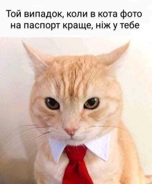 Мем про фото на паспорт