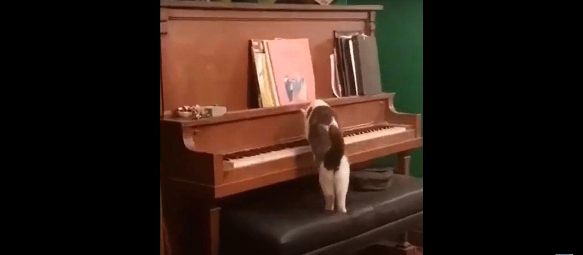 Кіт грає на піаніно.