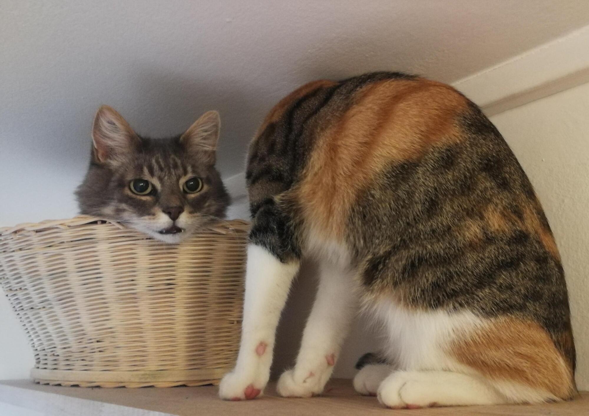 На фото голова кошки находится отдельно от туловища