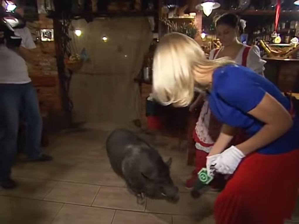 Жива свиня в донецькому пабі