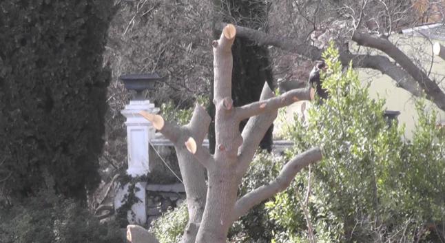 Пошкоджене дерево