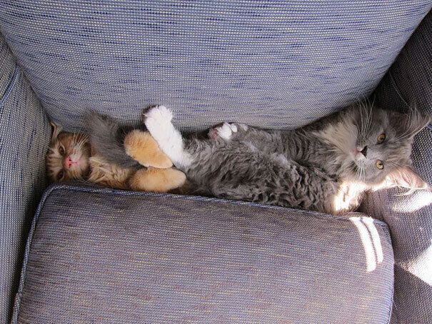 Коты проводят время с комфортом