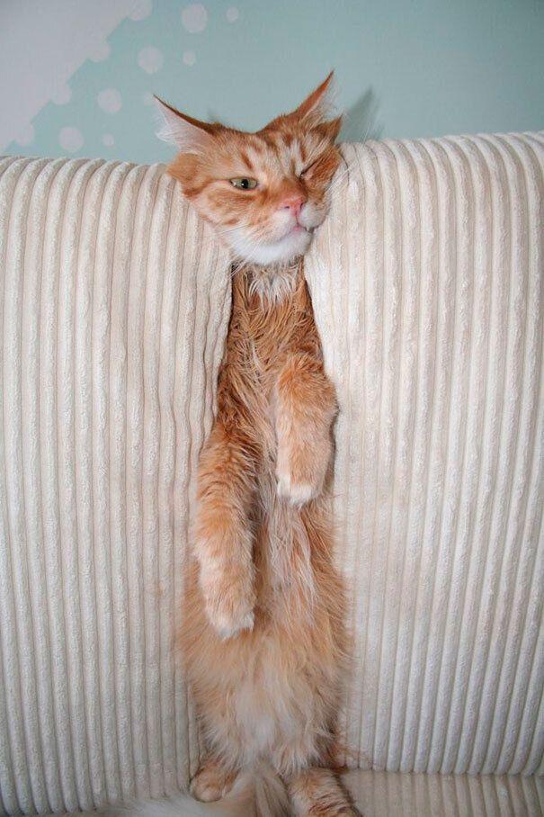 Кот отдыхает между подушками