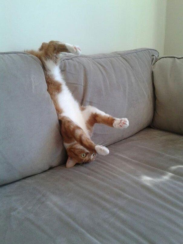 Кот застяг в диване.