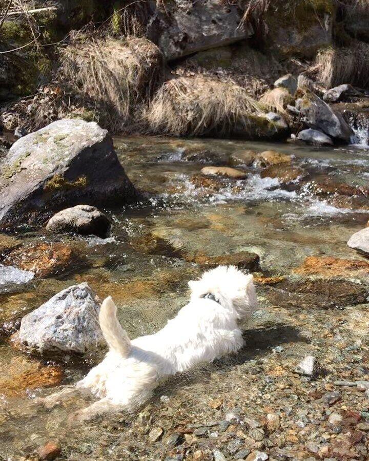 Собака обожает купаться в горных ручьях