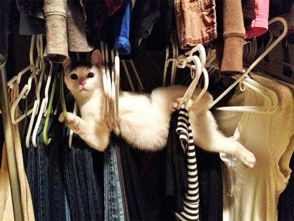 Кот застрял между вешалок