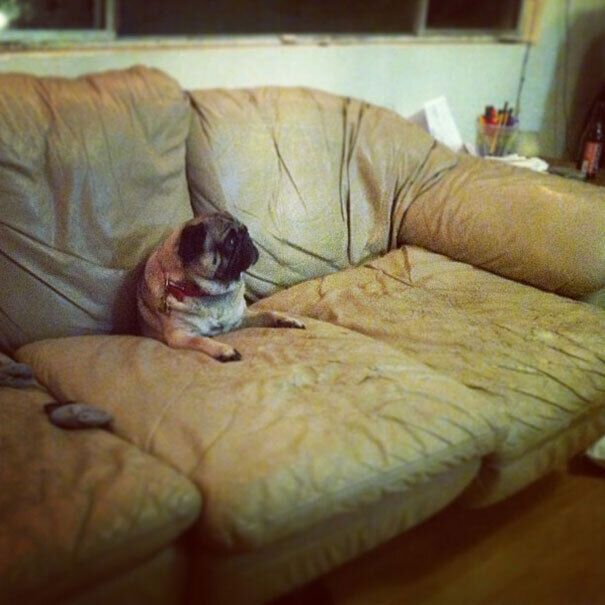Пес провалился в диван