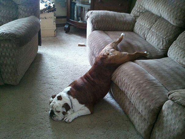 Пес устал после прогулки