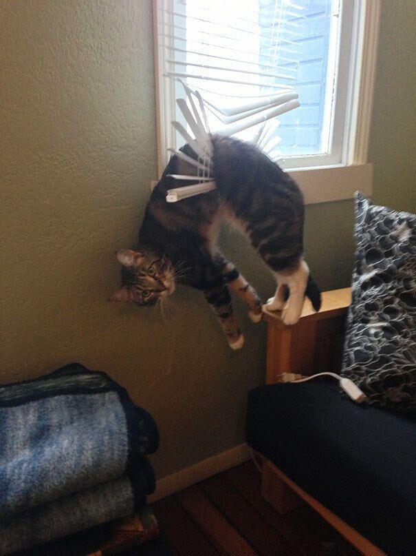 Кот повис на жалюзи