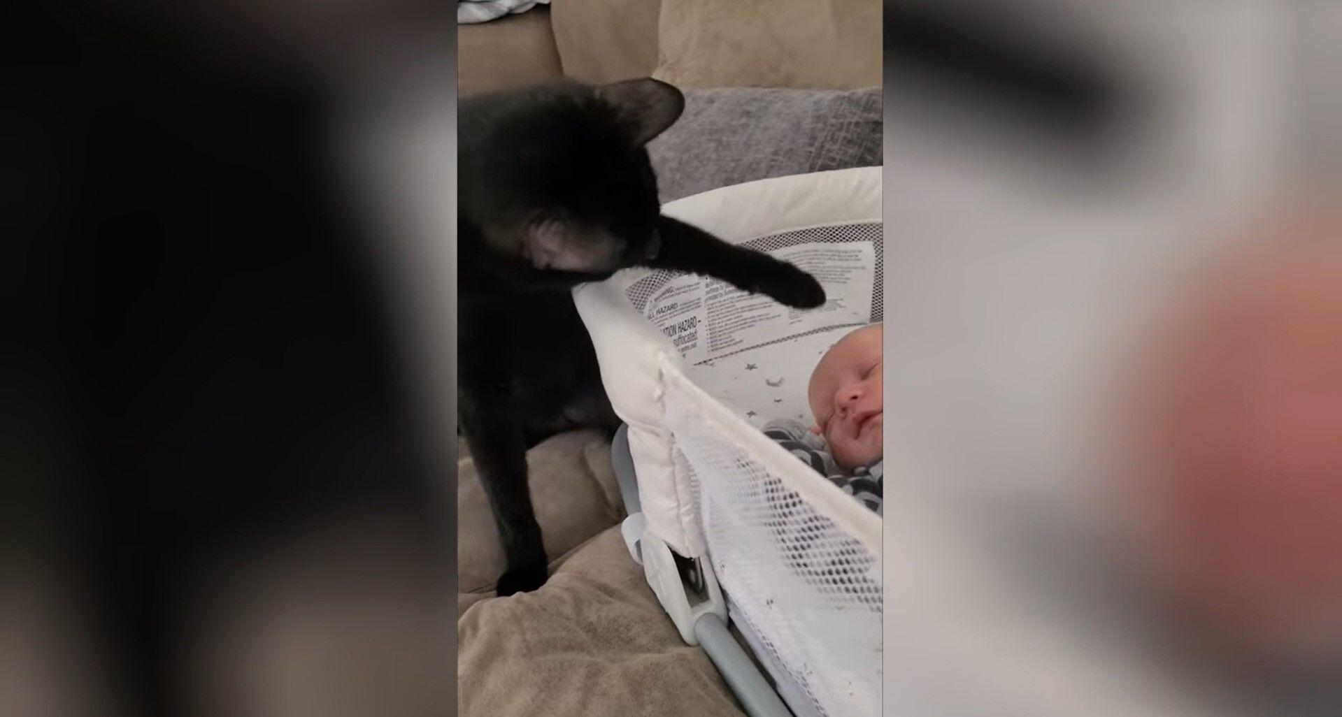 Кіт знайомиться з немовлям.