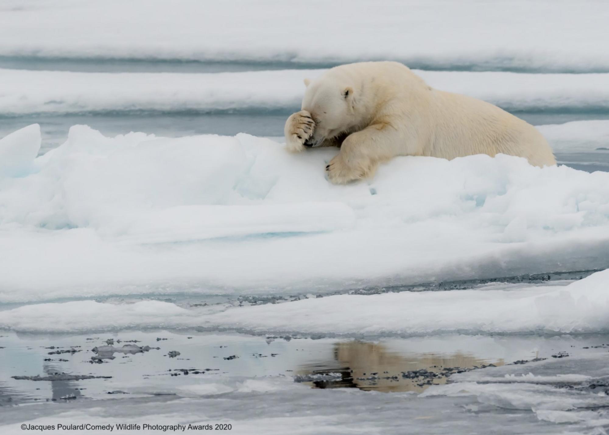 Расстроенный медведь прилег отдохнуть