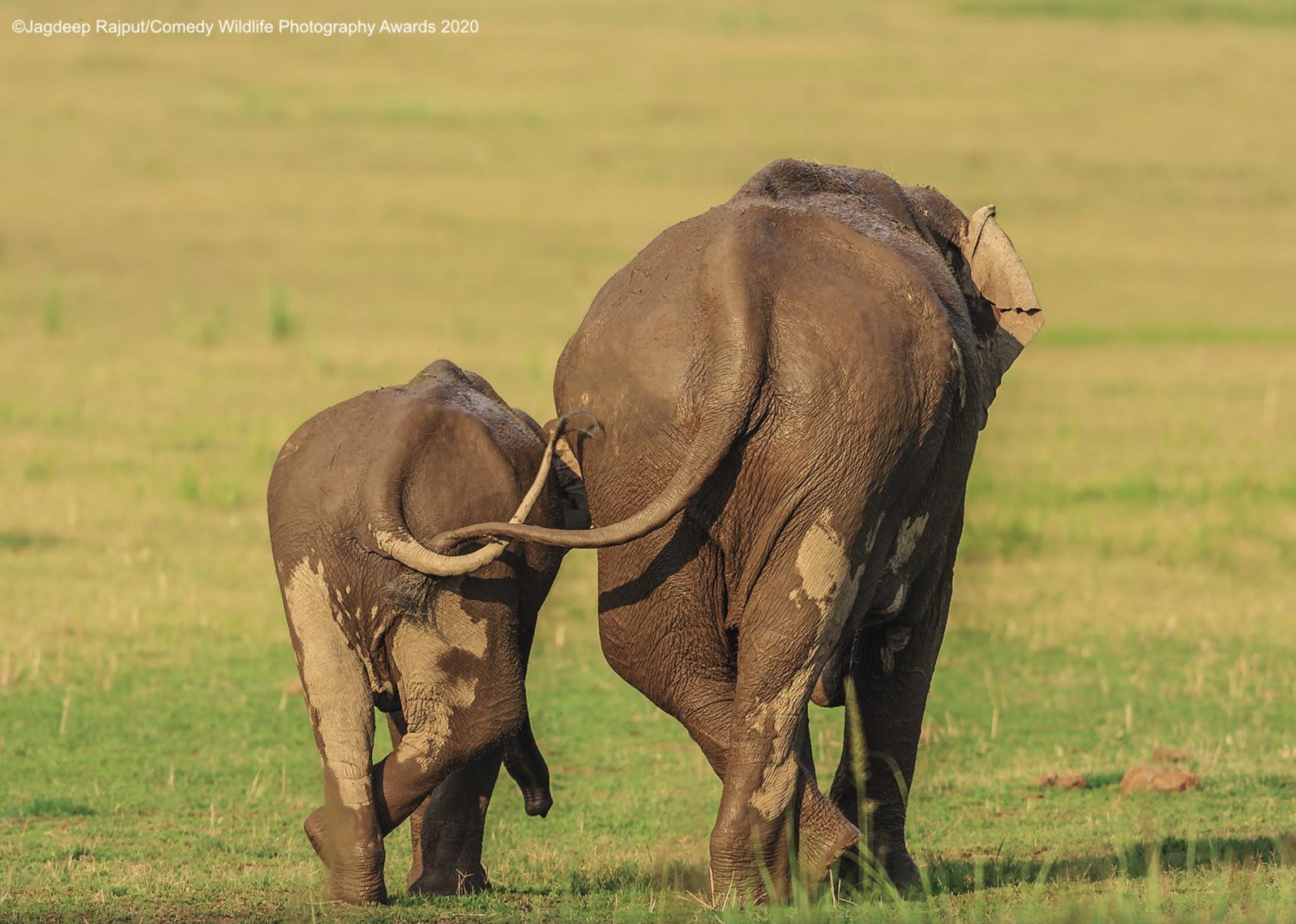 Слоны шагают рядом