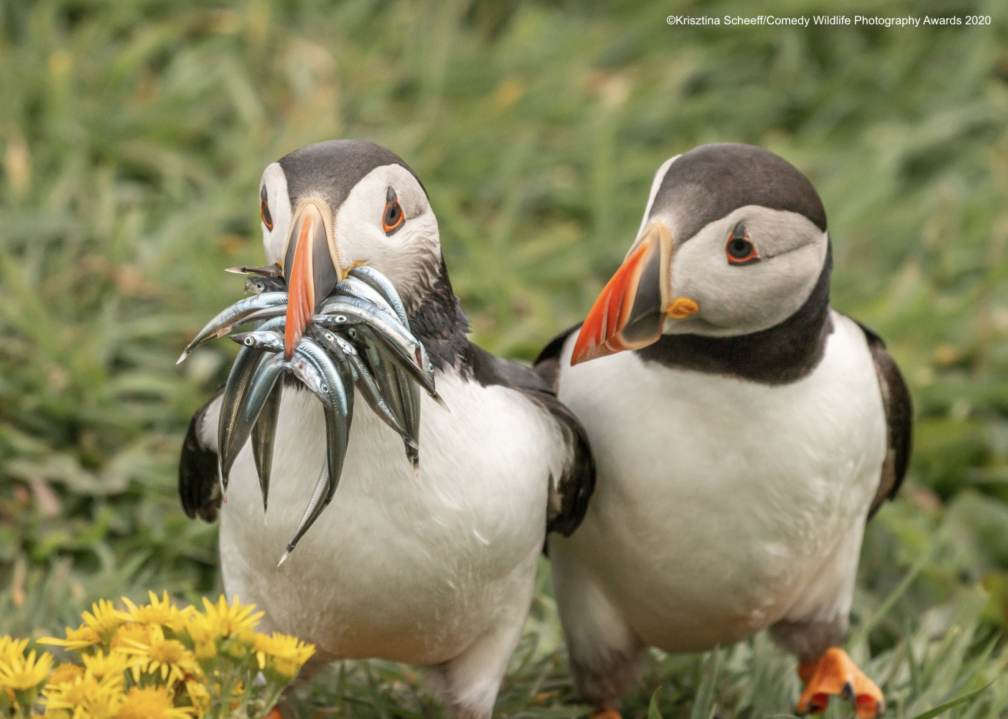 Птичка завидует добычи друга