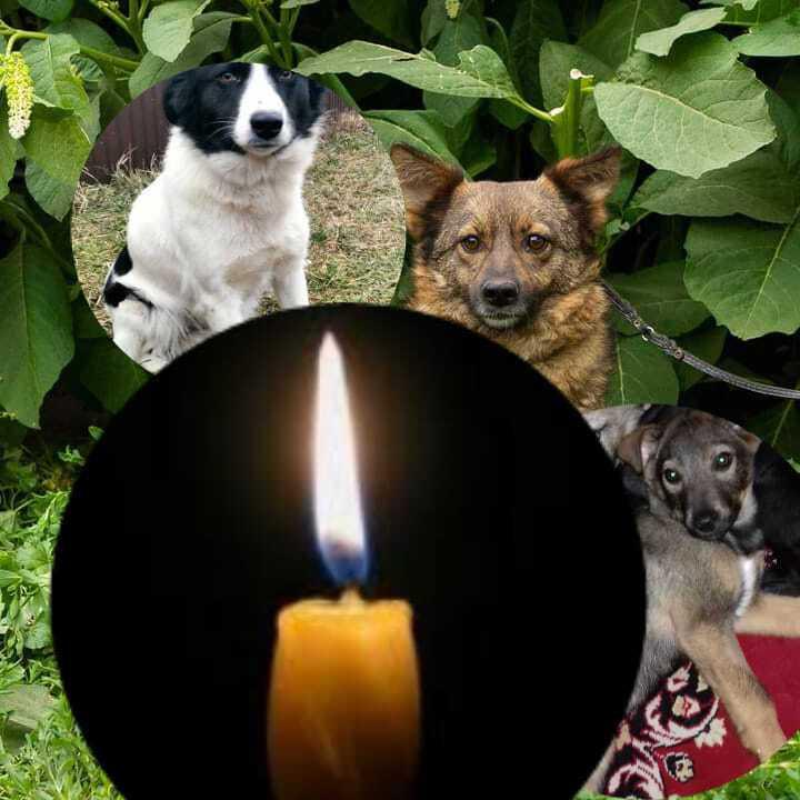 У Жмеринці вбили трьох собак.